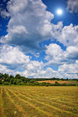 Mown hay with lines spring or summer background — Stock Photo