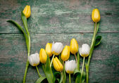 Spring Tulips flowers close up on green wooden — Stock Photo