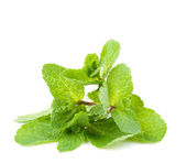 Fresh mint leafs — Stock Photo