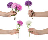 Hand set holding chrysanthemum — Stock Photo
