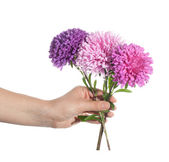 Hand holding pink chrysanthemum — Stock Photo
