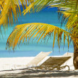 Exotic Caribbean coast — Stock Photo