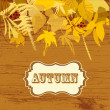 Autumn leaves background — Stock Vector