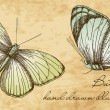 Stockvector : Vintage Butterfly Set