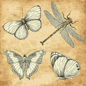 Old Butterfly collection — Stock Vector