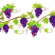 Grapes ornament — Stock Vector
