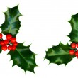 Clipping path. 2 sprigs of holly isolated on a white background — Stock Photo #8100687