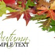 Stock Photo: Fall border or background with autumn leaves
