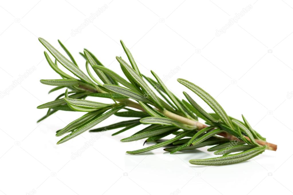 A single branch of of the herb rosemary — Stock Photo #13482343