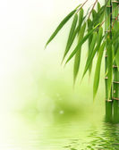 Bamboo border or background — Stock Photo