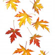 Falling autumn or fall leaves - Stock Photo