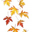 Falling autumn or fall leaves — Stock Photo
