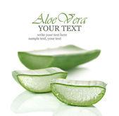 Fresh cut Aloe Vera slices — Stock Photo