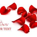 kırmızı gül yaprakları — Stok fotoğraf