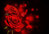 Red roses Valentine background — Stock Photo