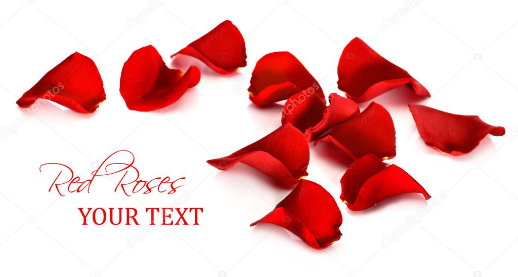 Red rose petals on a white background  Stock Photo #18702859