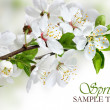 Spring blossom design with white flowers - Stock Photo