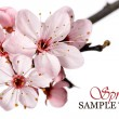 Pink spring blossom - Stock Photo