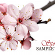 Stock Photo: Pink spring blossom