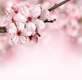 Lente bloesem achtergrond met roze bloemen — Stockfoto