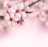 ピンクの花と春の花の背景 — ストック写真