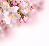 Pink spring blossom border background — Stock Photo