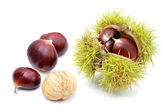 Chestnuts, isolated on a white background — 图库照片