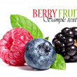 Berry fruit - Stock Photo