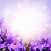 紫色风铃春天鲜花背景 — 图库照片
