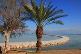 The Dead Sea coast — Stock Photo