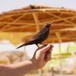 Stock Photo: Exotic bird on hand at beach