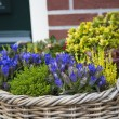 Beautiful colorful autumn flowers in wicker basket — Stockfoto #33677689