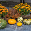 Autumn still life with pumpkins — Stock Photo