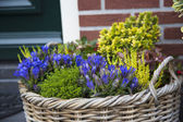 Beautiful colorful autumn flowers in a wicker basket — Stock fotografie