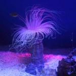 Underwater creature — Stock Photo