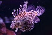 Beautiful colorful sea fish — Stock Photo