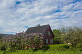 Wooden house in Norway — Stock fotografie