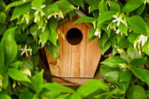 Hidden Bird House — Stock Photo