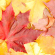 Group autumn leaves — Stock Photo