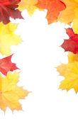 группа осенние листья decoracion — Стоковое фото
