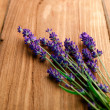 Lavender flowers — Stock Photo #27557659