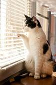 Katze im fenster — Stockfoto