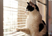 Cat looking at the window — Stock Photo