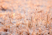 Photo plants frozen by frost at sunset — Stok fotoğraf