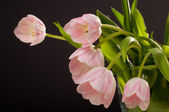 Spring decoration. Pink tulips in a vase — Stock Photo