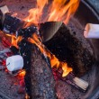 ������, ������: Roasting marshmallows