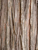 Cedar bark — Stock Photo