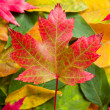Autumn leaf — Stock Photo #13436542