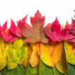 Autumn leaves on white - Stock Photo