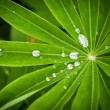 Water drops on leaves — Stock Photo #25873865